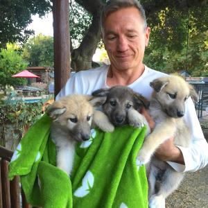 Tim with Pups